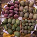 Фото 25: Плоды актинидии