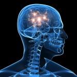Фото 21: Польза кипрея при сотрясении мозга
