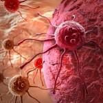 Фото 23: Польза сныти при онкологических заболеваниях