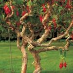 Фото 15: Элегантное растение фуксия