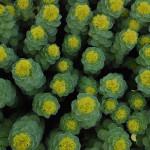 Фото 11: Цветки