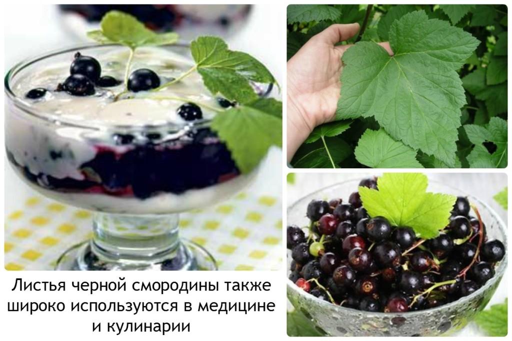 Вкусные рецепты из черной смородины
