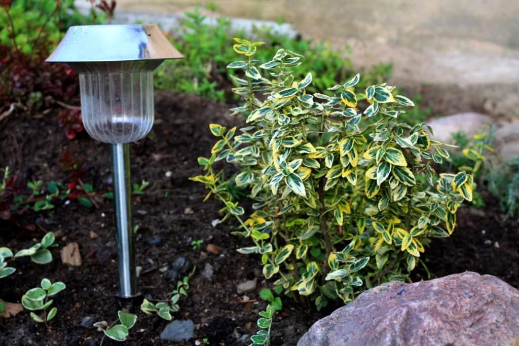 Фото 38: Посадка бересклета в саду