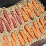 Фото 10: Песок и морковь