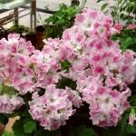 Фото 16: Нежно розовые