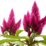 Фото 17: Растение