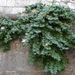 Фото 26: Растение