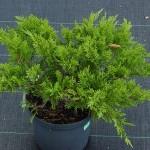 Фото 23: Растение