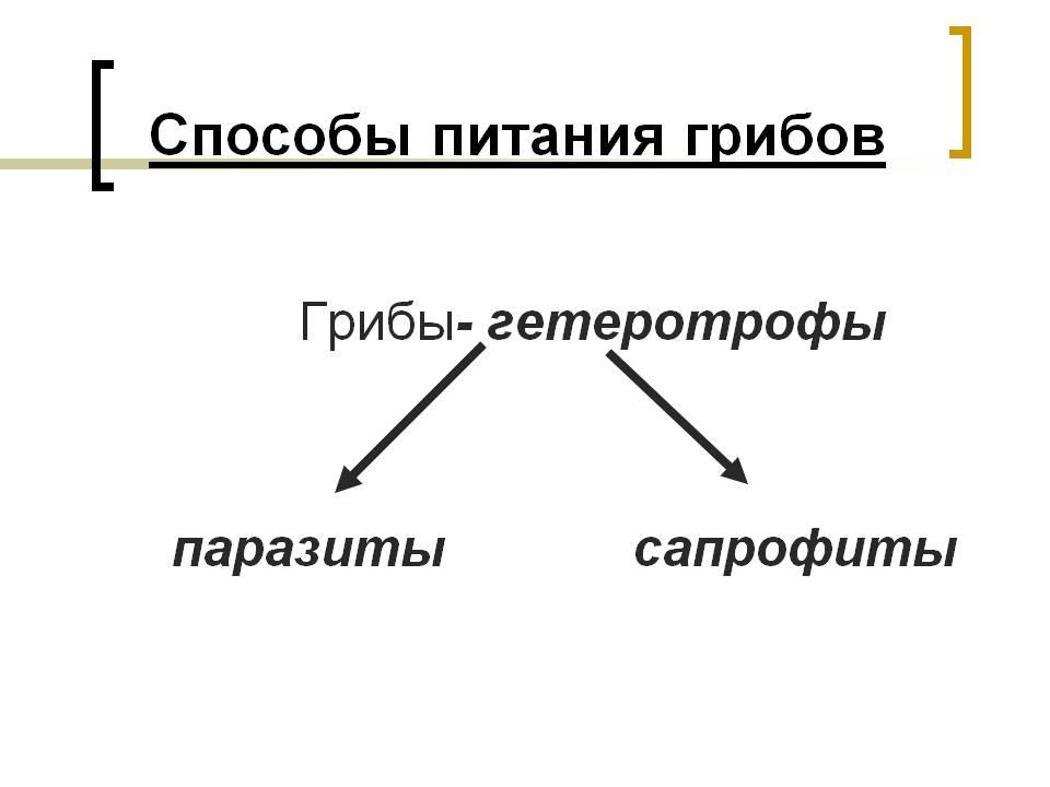 Сапрофиты