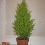 Фото 26: Горшок с растением