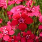 Фото 25: Розовые