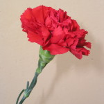 Фото 32: 1 цветок