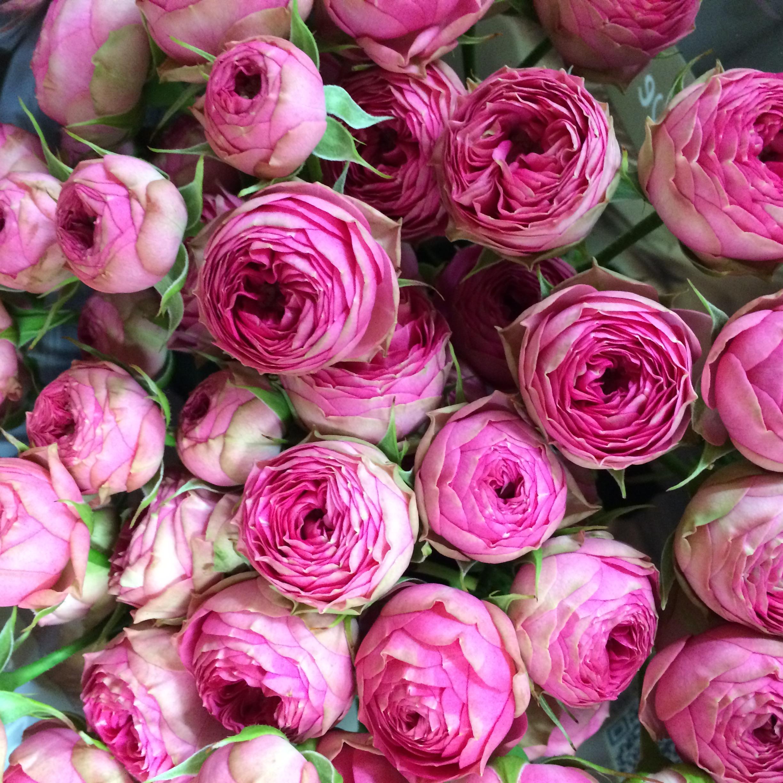 картинка пионообразные розы татуировки если сиськи
