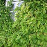 Фото 7: Листья