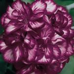 Фото 8: Фиолетовый