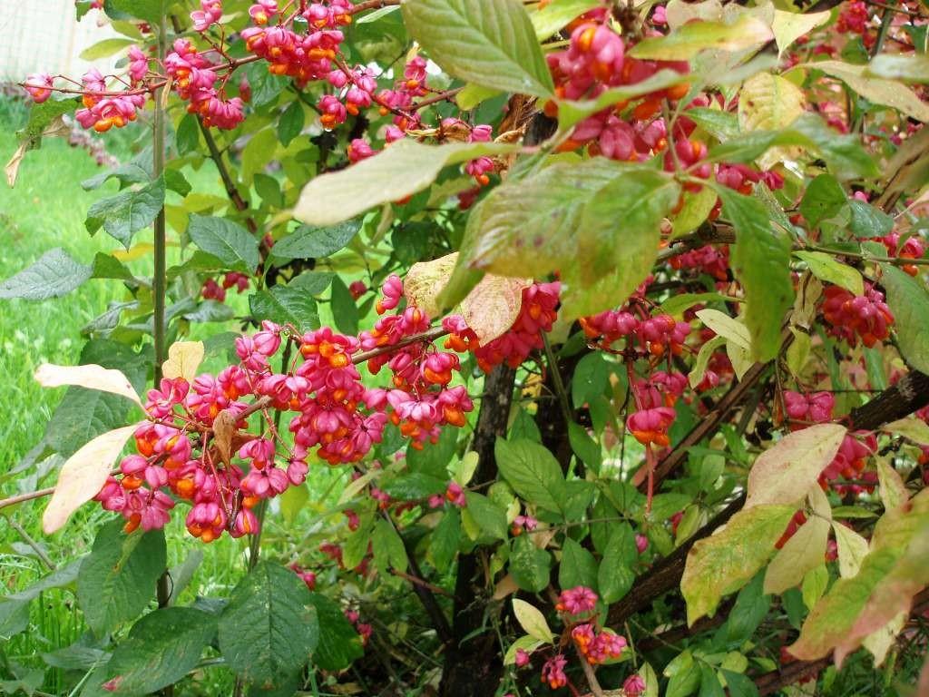 Бреслет в саду цветет