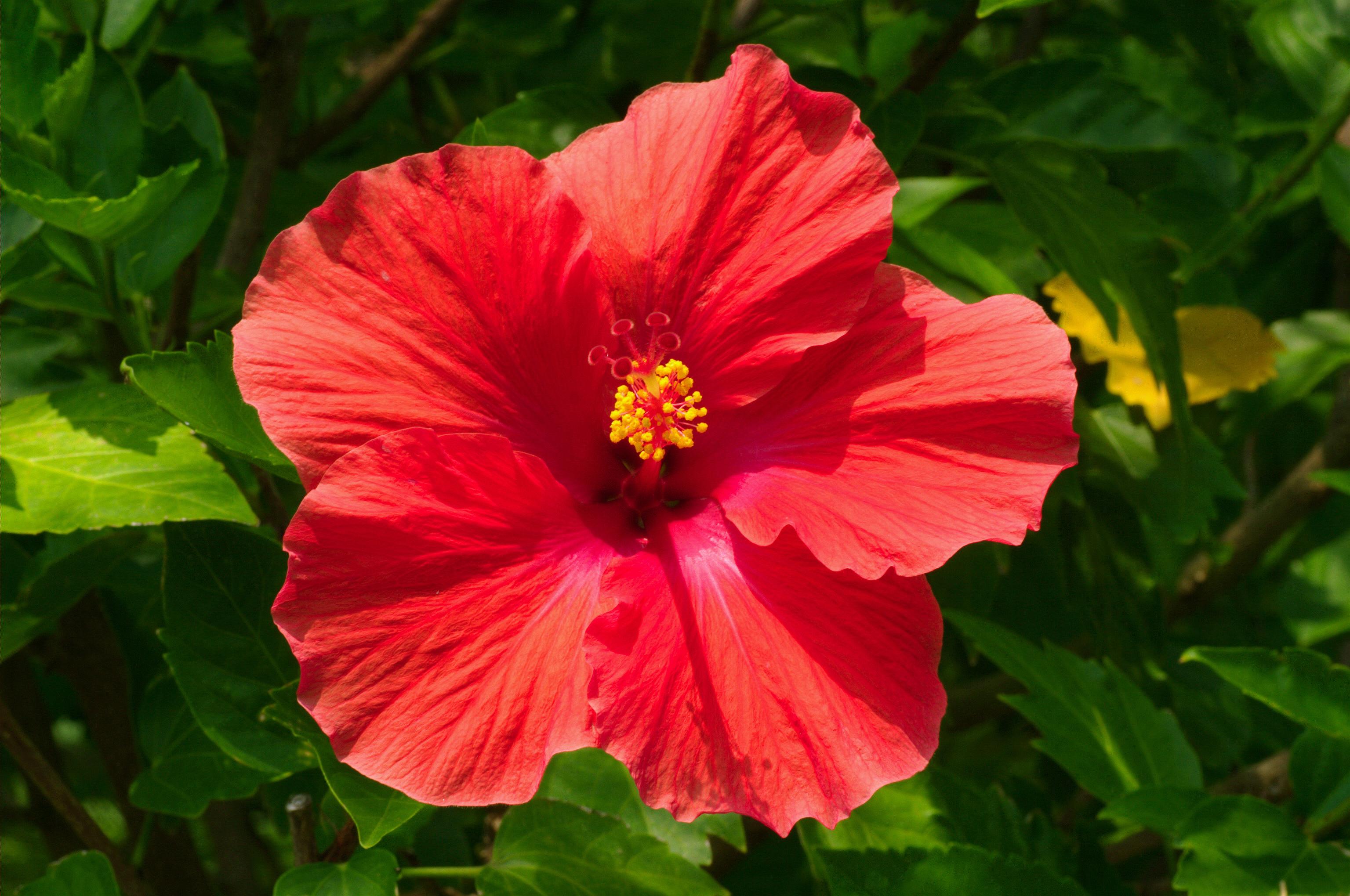 Flower_011