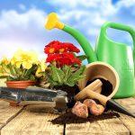 Фото 156: Примула многолетняя посадка и уход фото садовая