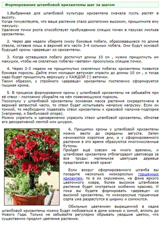 Уход за цветком - инструкция