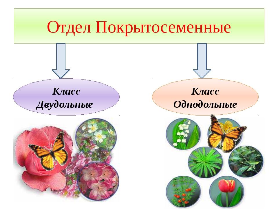 Фото 15: Виды покрытосеменных растений