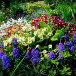 Фото 9: Клумба из различных первоцветов