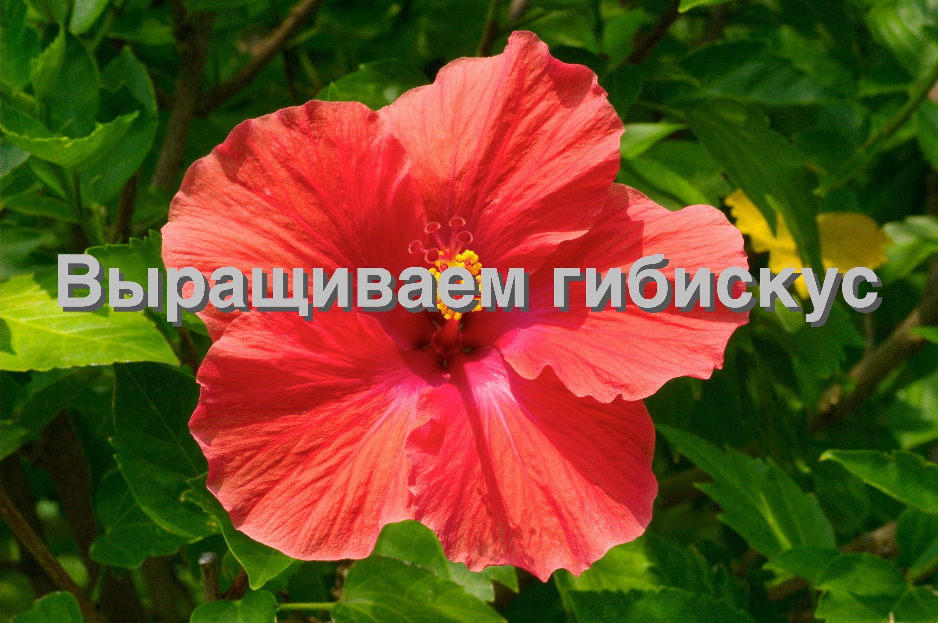 Фото 15: