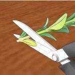 Фото 89: Обрезка черенков самшита