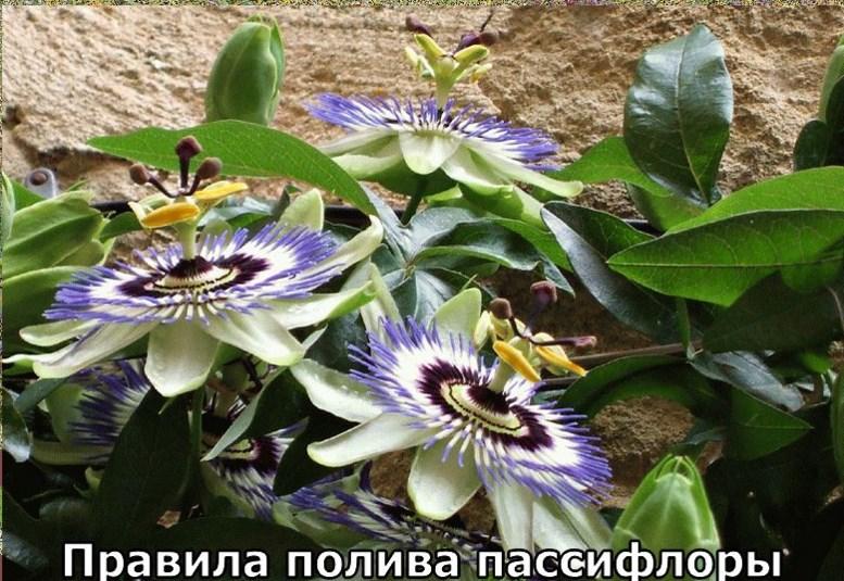 Фото 11: