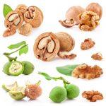 Фото 82: Плоды грецких орехов в разрезе