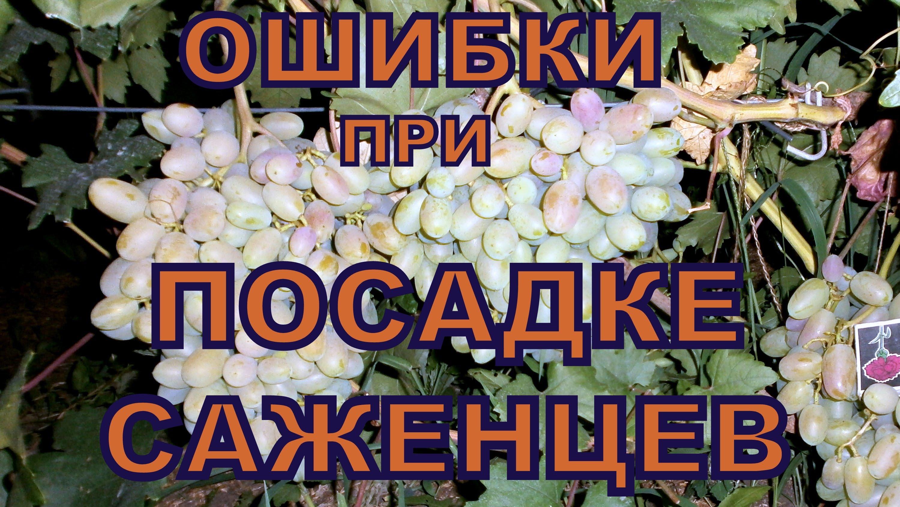 Фото 18: