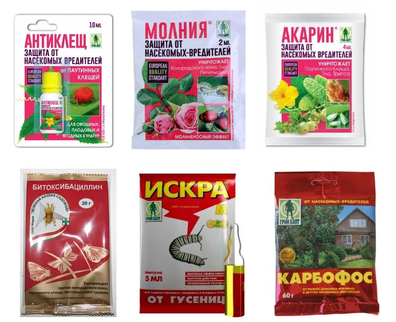 Препараты для обеззараживания самшита