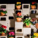 Фото 144: Выращивание примул в домашних условиях