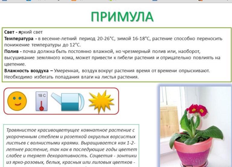 Описание растения примулы