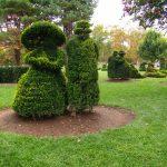 Фото 159: Топиарий в саду из самшита
