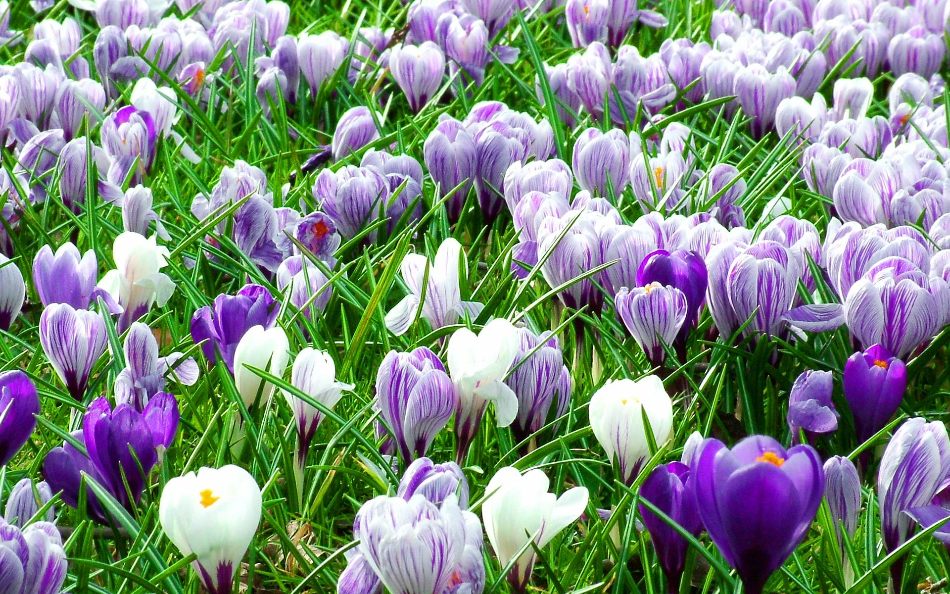 Фото 28: spring-flowers-15_smiling-da-vinci_nc