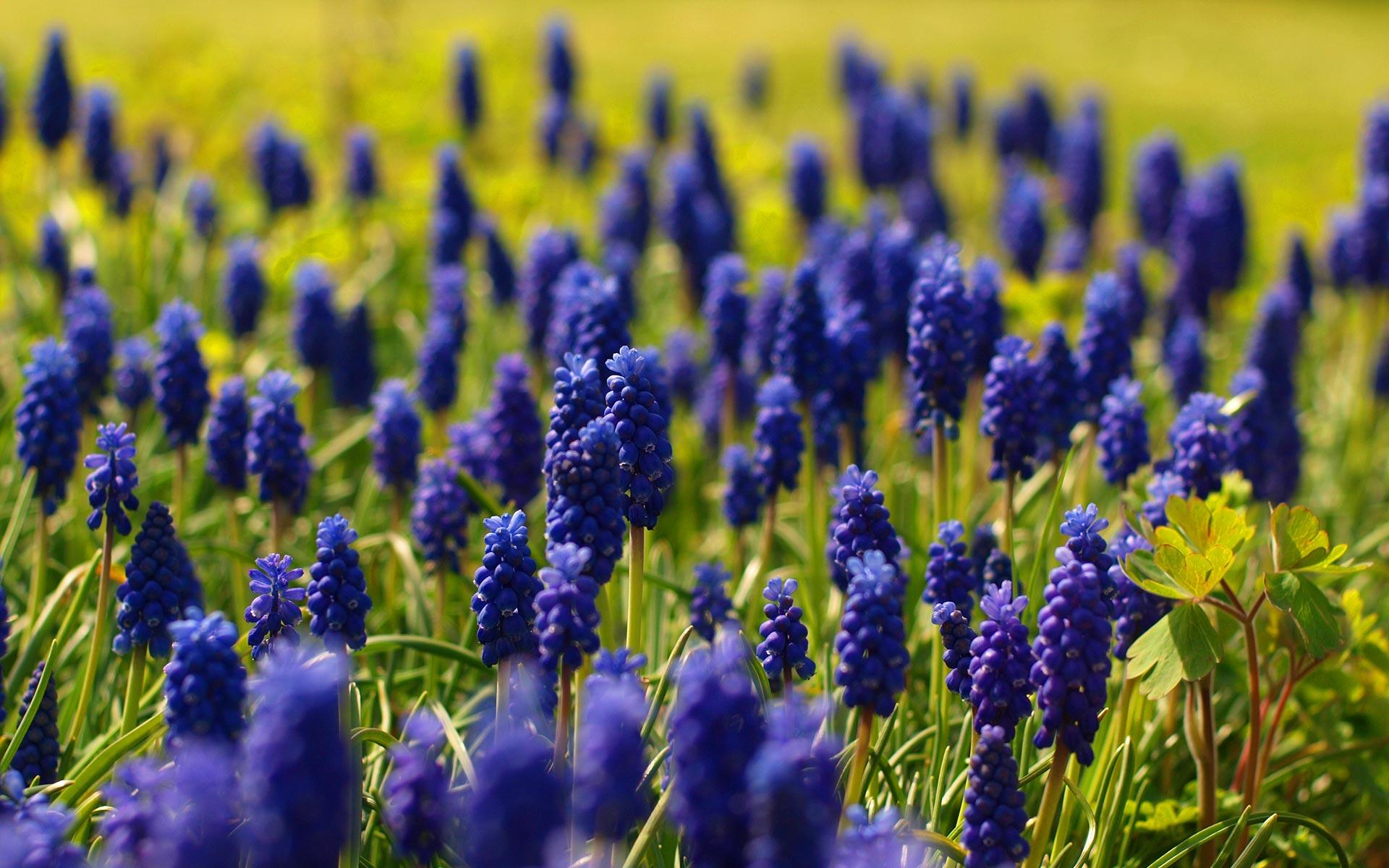 Фото 29: spring-flowers-16_pepemczolz_sa
