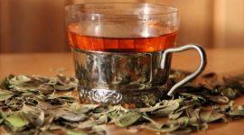 Полезные свойства листьев брусники: готовим напитки для настроения, иммунитета и пищеварения