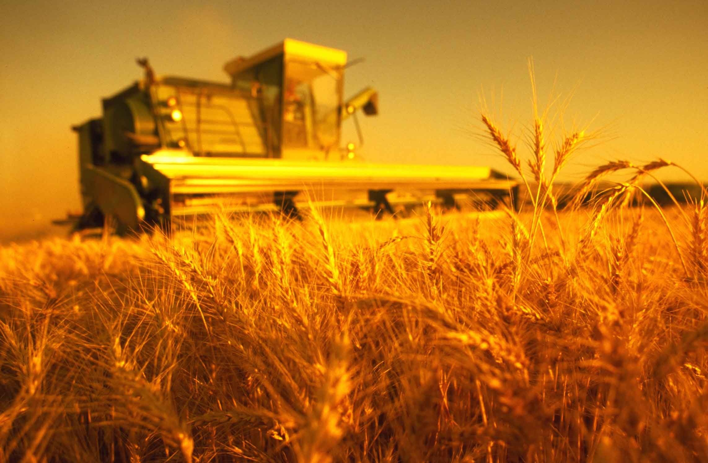 красивые картинки к дню сельского хозяйства