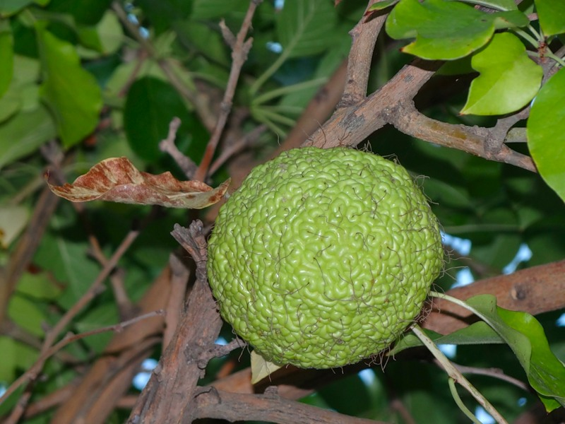 Фото караоке бар утка яблоки ставрополь