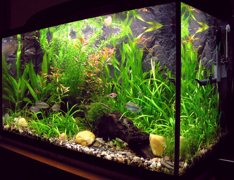 Очищение воды в аквариуме