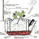 Фото 73: Выбор места и выращивание винограда в открытом грунте