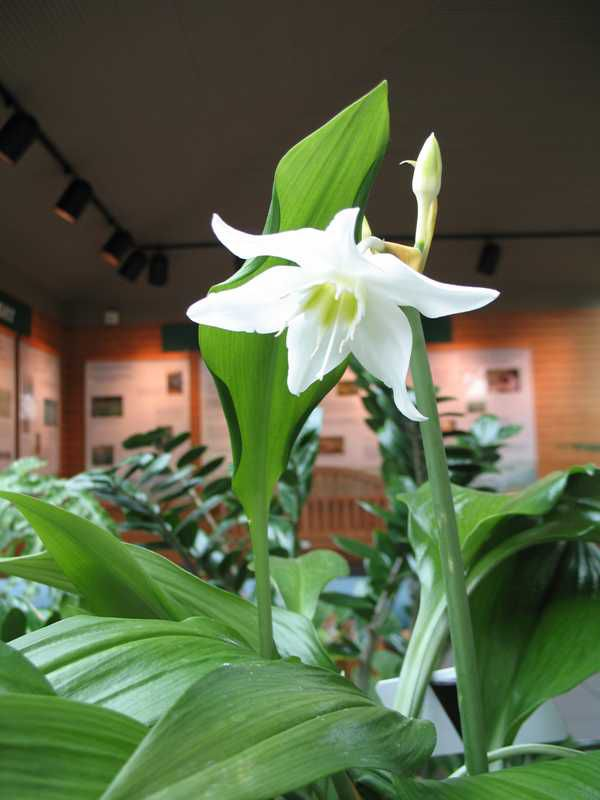 Фото 30: Красива лилия на фото