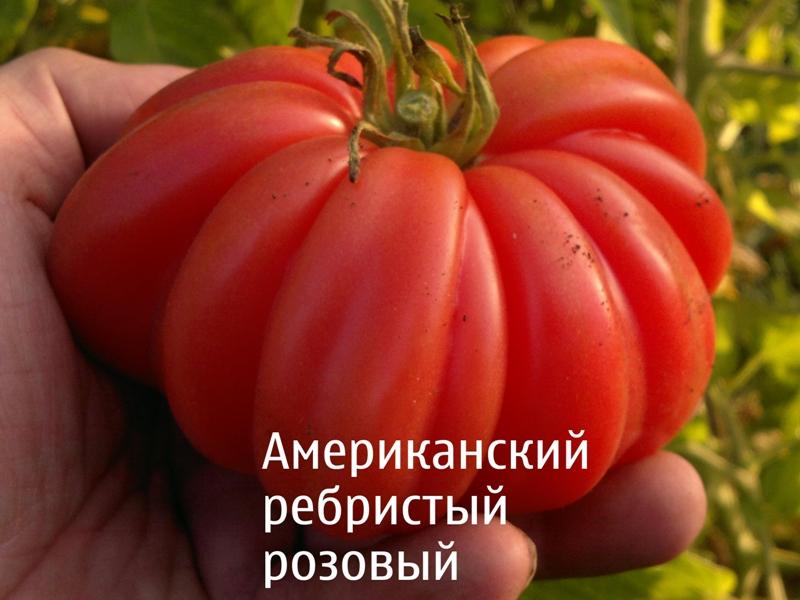 Фото 7: Американский ребристый розовый сорт томата