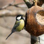 Фото 51: Кормушка из кокоса