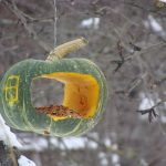 Фото 52: Кормушка из тыквы