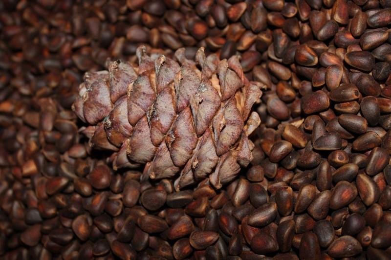 Фото 9: Кедровые орехи