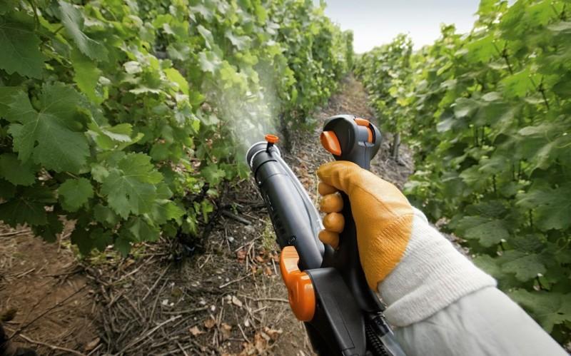 Фото 16: Опрыскивание винограда