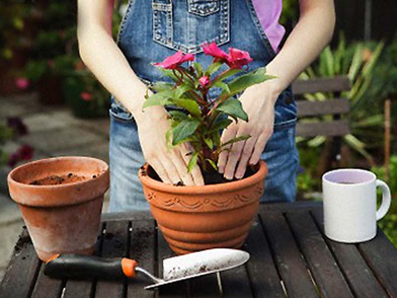 Уход за растением во время пересадки