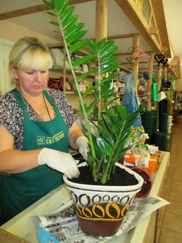 Пересдка - стресс для растений