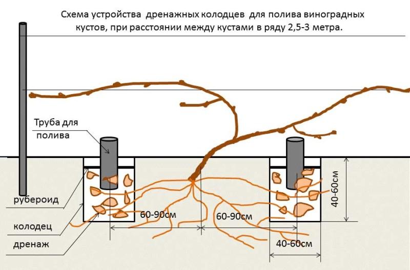 Фото 19: Схема полива винограда